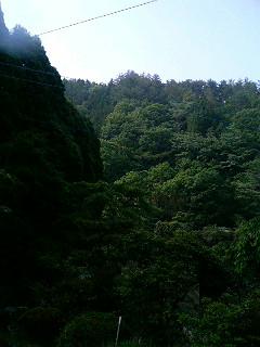 しろちゃんinトトロの森